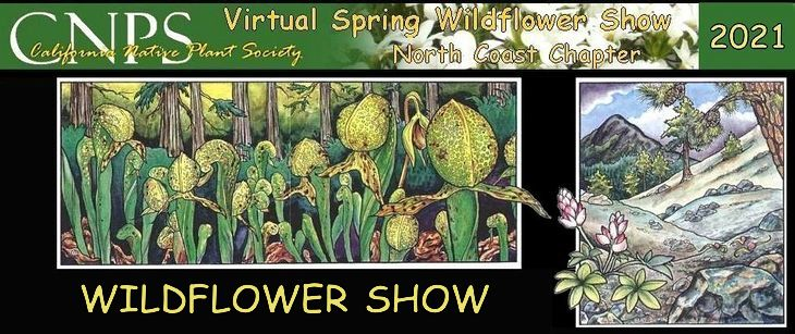wildflower show 95038 cover 730w