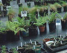native plant sale .jpg